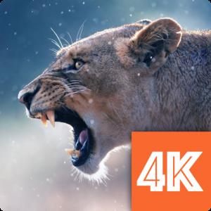 Wallpapers 4K 2020 Crack + License key Free Download